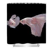 Betta3080 Shower Curtain