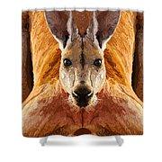 Big Boy Red Kangaroo   Shower Curtain