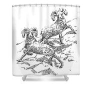 Bighorns Shower Curtain