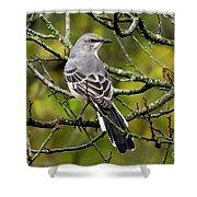 Mockingbird In Tree Shower Curtain