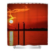 Bird On A Pole Sunrise Shower Curtain