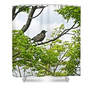 Bird Resting On Branch Shower Curtain