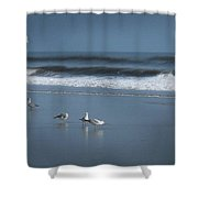 Birds And Waves Shower Curtain