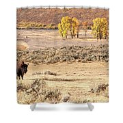 Bison And Cottonwoods Shower Curtain