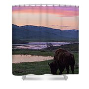 Bison At Sunrise Shower Curtain