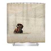 Bison Bull  Shower Curtain