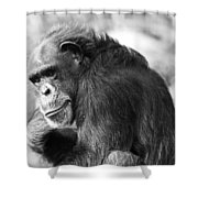 Black And White Chimp Shower Curtain