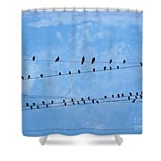 Black Birds On Crossed Wires Shower Curtain