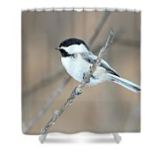 Black-capped Chickadee In Spring Shower Curtain
