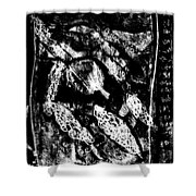 Black Ivory Actual 1b21x Shower Curtain