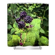 Black Raspberries  Shower Curtain