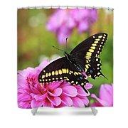 Black Swallowtail Shower Curtain