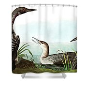 Black Throated Diver, Colymbus Arcticus By Audubon Shower Curtain