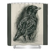 Blackbird In The Grass Shower Curtain by MM Anderson