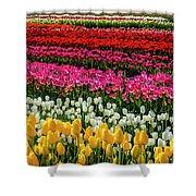 Blazing Tulips Shower Curtain