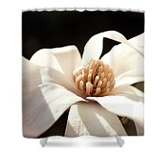 Black And White Shower Curtain