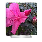 Bloom And Bud Shower Curtain