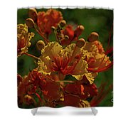 Blooming Away Shower Curtain