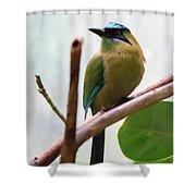 Blue-crowned Motmot Shower Curtain