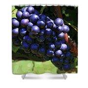 Blue Grape Bunches 5 Shower Curtain