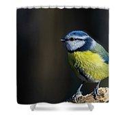 Blue Tit Sitting On Wood Shower Curtain by Scott Lyons