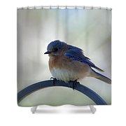 Bluebird Fluff Shower Curtain