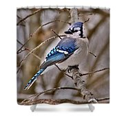 Bluiejay Shower Curtain