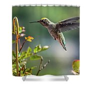 Bobbette At Play Shower Curtain
