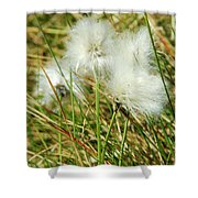 Bog Cotton On The Moor Shower Curtain