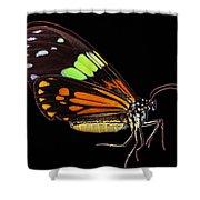 Boisduval's Tiger Moth Shower Curtain