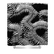Brain Coral In Macro Bw Shower Curtain