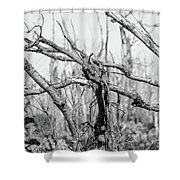 Branches In Black And White Shower Curtain