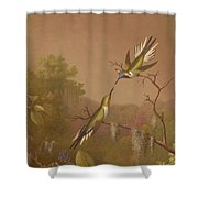 Brazilian Hummingbirds II Shower Curtain