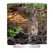 Briar Brunch H1934 Shower Curtain by Mark Myhaver