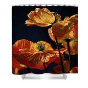 Bright Orange Poppies Shower Curtain