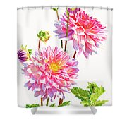 Bright Pink Dahlias With Buds Shower Curtain