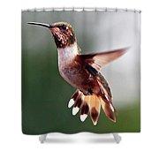 Broad Tailed Hummingbird Shower Curtain