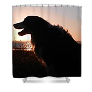 Brodie In The Sun Shower Curtain