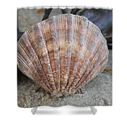 Brown Cockle Shell And Driftwood 2 Shower Curtain