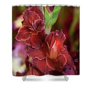 Brown Jewel 5. The Beauty Of Gladiolus Shower Curtain