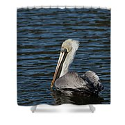 Brown Pelican Shower Curtain by Jemmy Archer