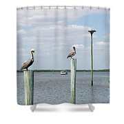 Brown Pelicans On Pilings And An Osprey Nest In The Tarpon Bay A Shower Curtain