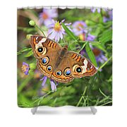 Buckeye In Autumn Shower Curtain