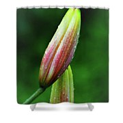 Buds Shower Curtain