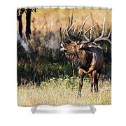 Bull Elk 3068 Shower Curtain