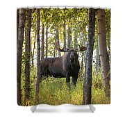 Bull Moose In Fall Forest Shower Curtain