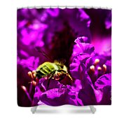 Bumble Bee On A Rhodedendron  Shower Curtain