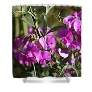 Bunch Of Pink Sweet Peas In The Sun Shower Curtain
