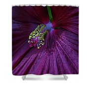Burgundy Hibiscus Shower Curtain