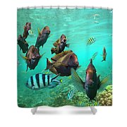 Butterflyfish And Sergeant Major Shower Curtain